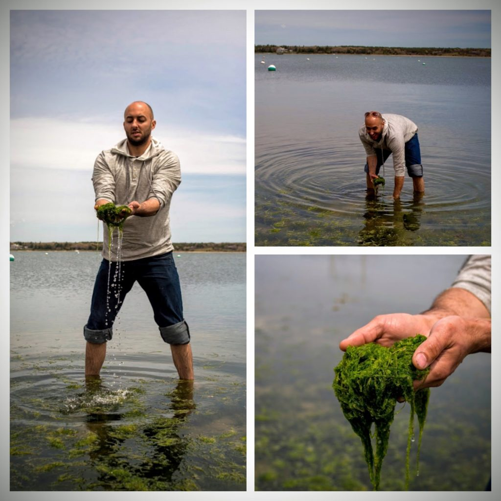 Chef patrisck collecting seaweed