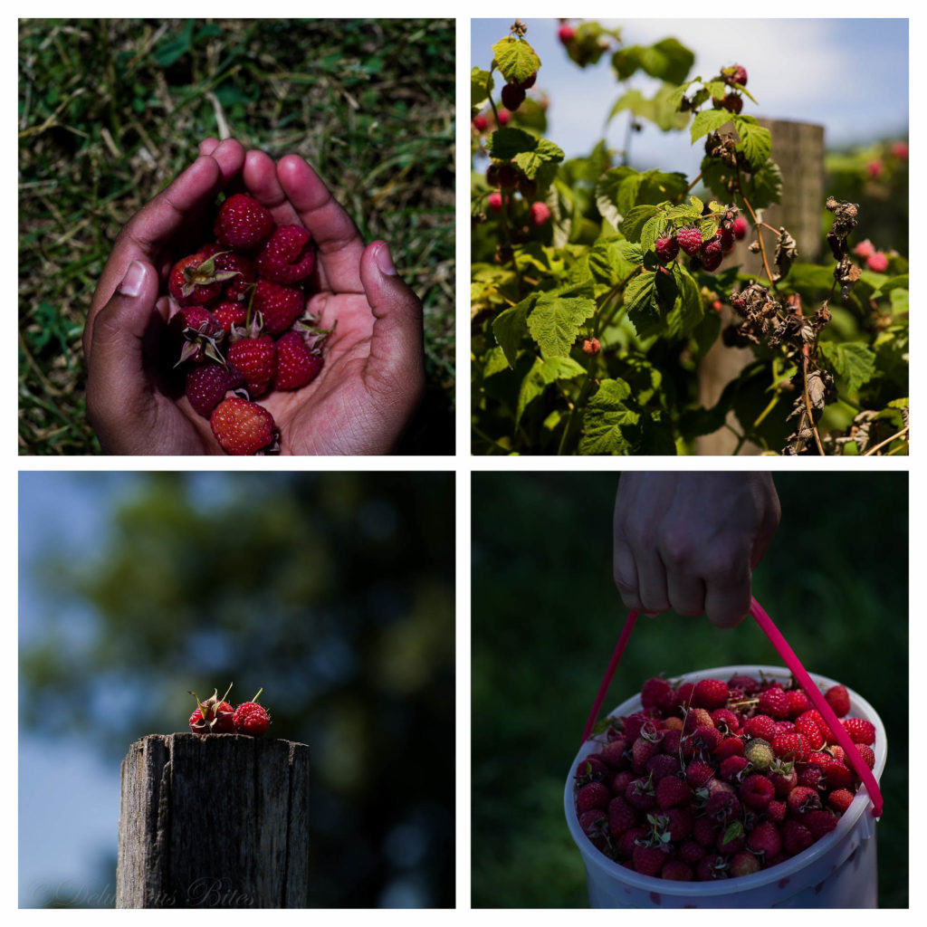 Raspberry Picking collage 1
